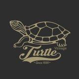 Logo de tortue Photographie stock libre de droits
