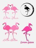Logo del fenicottero Insieme dell'icona Isolato su priorità bassa grigia Fotografie Stock Libere da Diritti