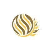 Logo del grano Immagine Stock