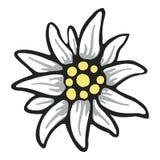 Logo della Germania delle alpi di alpinismo di simbolo del fiore dell'edelweiss illustrazione vettoriale