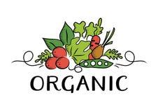 Logo di verdure ed organico fotografia stock