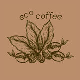 Logo eco coffee. Logo with the image of germinated beans, coffee leaves and coffee berry Royalty Free Stock Image