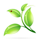 Logo Ecology Concept. With Green Leaves and Ladybug Stock Photos