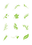 Logo elements leafs -. Logo elements leafs shapes Stock Photos