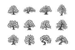 Logo enorme e sacro della siluetta della pianta della quercia isolato sull'insieme bianco del fondo illustrazione di stock