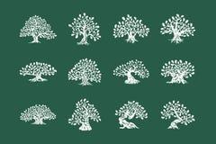 Logo enorme e sacro della siluetta della pianta della quercia isolato sull'insieme verde del fondo illustrazione di stock