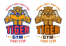 Logo for fighting club with angry tiger. Template sport logo for fighting club with angry tiger Stock Images