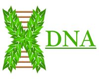 Logo in the form of DNA, for business cards. vector illustration