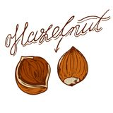 Hazelnut. Logo of the hazelnut in retro style with a name drawn by hand in retro styles Royalty Free Stock Images