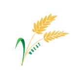 Logo Icon Design Wheat Farm Photographie stock