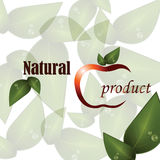 Logo of natural product. Vector background with stylized apple, spring green leaves and signs on white  background with gray leaves. Logo of natural product Royalty Free Stock Image