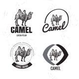 Logo noir et blanc de vecteur réglé avec le chameau de désert Photographie stock