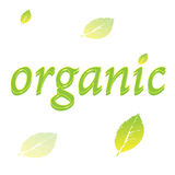 Logo o etichetta organico della foglia Immagine Stock
