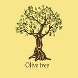Logo of olive tree with berries on branches Royalty Free Stock Images