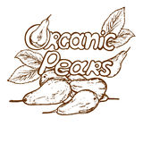 Logo organic pears. Logo with the word organic pears in a retro style Royalty Free Stock Images