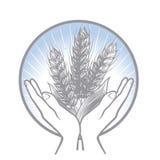 logo Prise du soin au sujet de la récolte de blé Photos stock