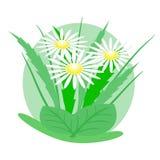 Logo stokrotki Obrazy Royalty Free