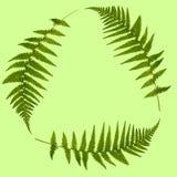 logo vert de lame Photos stock