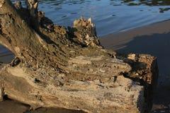 Logon пляж Стоковые Изображения