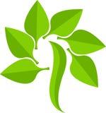Logotipo à moda da folha Fotografia de Stock Royalty Free