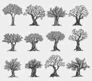 Logotipo aislado, iconos de los árboles del aceite de oliva de la agricultura Imagenes de archivo