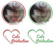 Logotipo da proteção dos gatos com o gato branco da pata para organizações caritativas fotos de stock