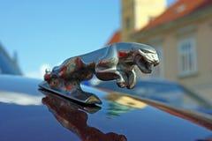 Logotipo de Jaguar 3D en el coche de la obra clásica de Jaguar XJ6 Imágenes de archivo libres de regalías