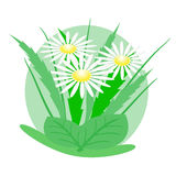 Logotipo de las margaritas Imágenes de archivo libres de regalías