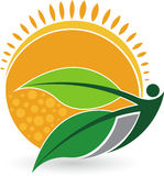 Logotipo del ser humano de la hoja del verano Foto de archivo