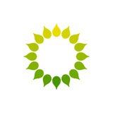 Logotipo estilizado do sol Ícone redondo do sol, flor Logotipo isolado do verde amarelo no fundo branco Quadro Fotos de Stock Royalty Free