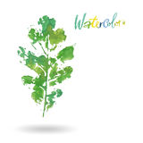 Logotipo moderno creativo de la hoja del árbol del eco pintado en acuarela stock de ilustración