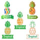 Logotipo tropical, abacaxi do símbolo Foto de Stock