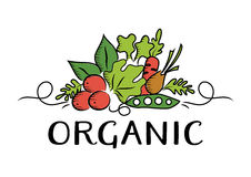 Logotipo vegetal y orgánico Foto de archivo