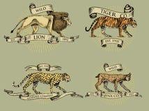 Logotipos del lince y del leopardo del tigre del león, emblemas o insignias con los animales salvajes y banderas o cintas en el v Fotografía de archivo