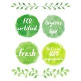 Logotipos verdes de la acuarela fijados Foto de archivo