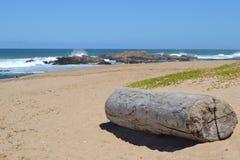 Logował się plażę Fotografia Stock