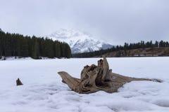 Logował się zamarzniętego jezioro Zdjęcie Royalty Free