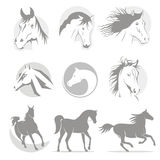 Logowie końscy Obraz Stock