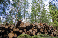 Logpile in the forest Royalty Free Stock Photos