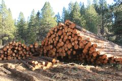 Logpile in the National Forest Royalty Free Stock Images