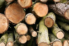 Logs. A pile of logs stock images