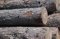 Logs Stock Photo