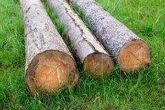 logs Immagini Stock