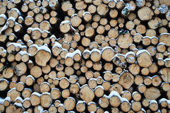 Logs. In the forest whit snow Stock Images