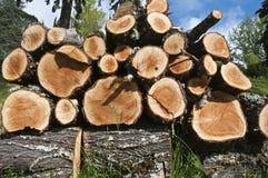 Free Logs Stock Image - 14955311