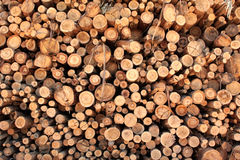 Logs Stock Photography