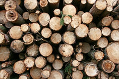 Logs. Royalty Free Stock Image