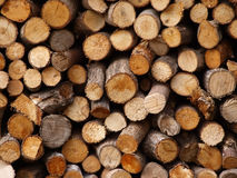 Logs. Ends of chopped logs showing grain Stock Photo