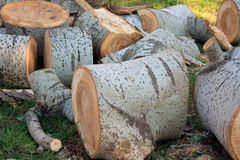 Logs Stock Images