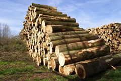 Logs Stock Photos